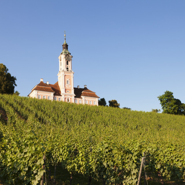 """""""Vineyards and pilgrimage church of Birnau Abbey, Unteruhldingen, Lake..."""" stock image"""