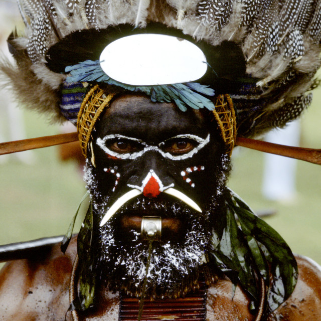 """Man at Sing Sing tribal gathering, Mount Hagen, Papua New Guinea"" stock image"