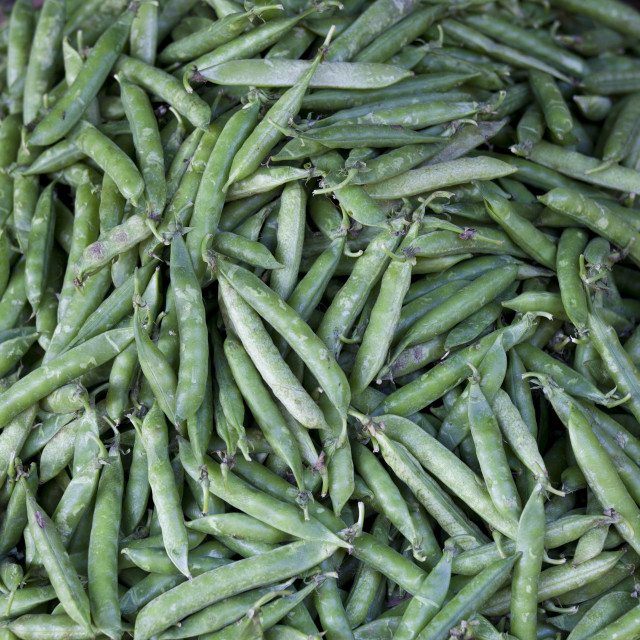 """""""Fresh peas in a pod on sale at market stall in Varanasi, Benares, India"""" stock image"""