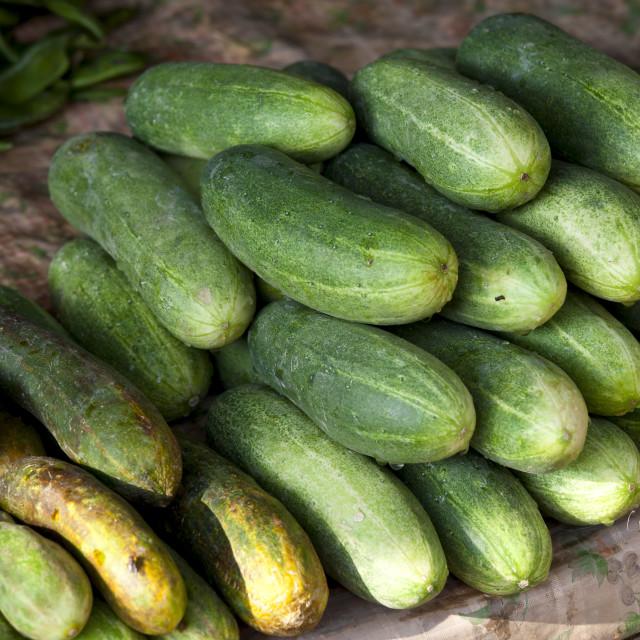 """Fresh cucumbers on sale at market stall in Varanasi, Benares, India"" stock image"