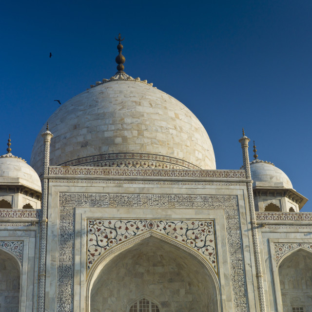 """""""The Taj Mahal mausoleum with birds flying around the dome, southern view..."""" stock image"""