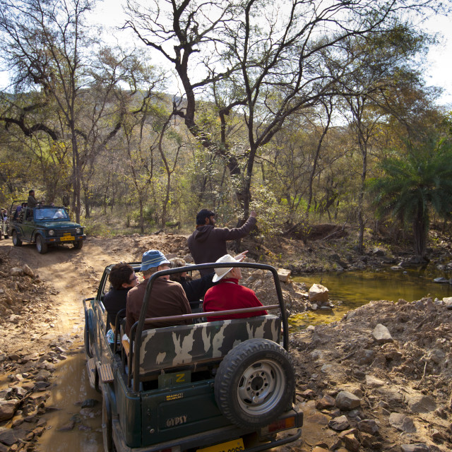 """Tour groups of eco-tourists in Maruti Suzuki Gypsy King 4x4 vehicle at..."" stock image"