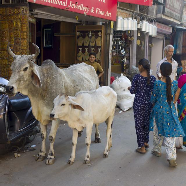 """""""Crowded street scene people, cows, traffic at Sardar Market at Girdikot,..."""" stock image"""