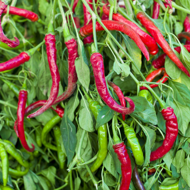 """""""Red and green chili peppers, Capsicum pubescens, on sale in food market in..."""" stock image"""