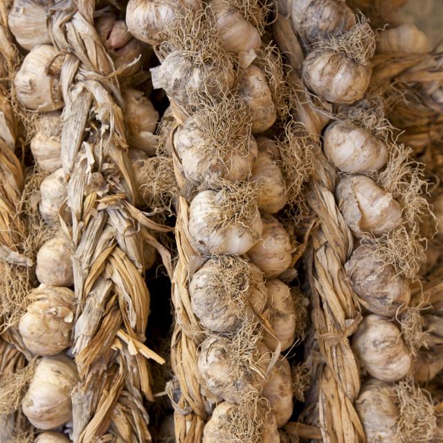 """Garlic plaits, Allium sativum, on sale in food market in Pienza, Tuscany, Italy"" stock image"