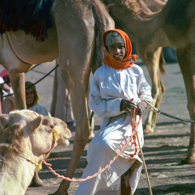 """A young camel boy, wearing an arab scarf head-dress, left in charge of camels..."" stock image"