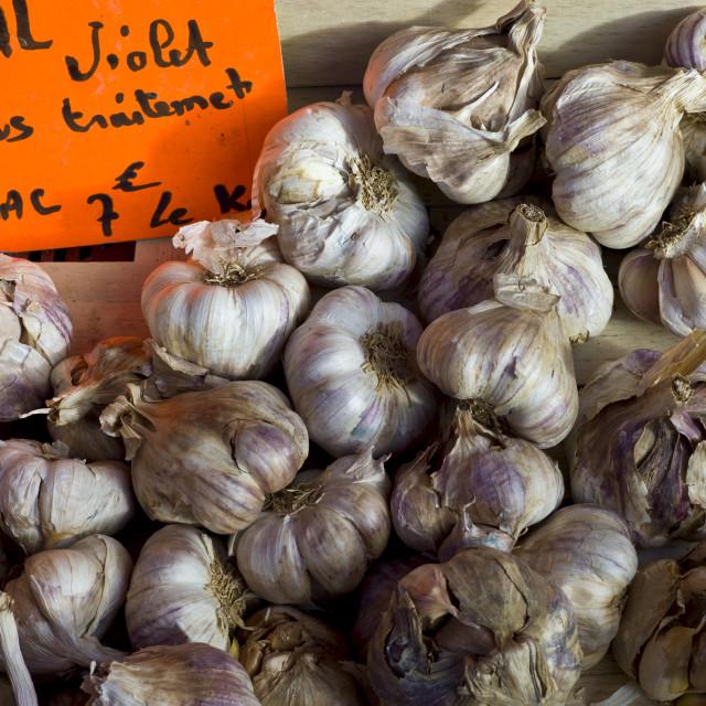 """Fresh garlic violet ail, Allium sativum, at food market in Bordeaux region of..."" stock image"