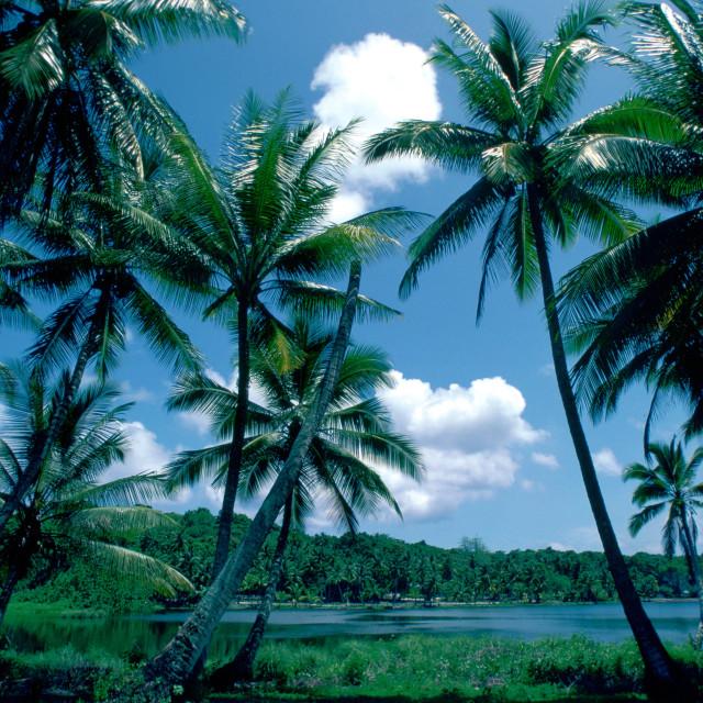 """Sun, sea and palm trees at Nauru lagoon, South Pacific"" stock image"