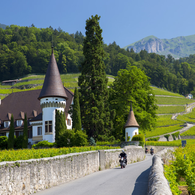 """Wine estate, Chateau Maison Blanche, at Yvorne in the Chablais region, Vaud,..."" stock image"