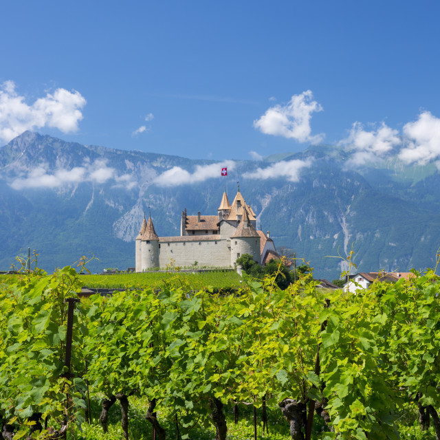 """Chablais vines in front of the Chateau de Aigle and the village of Aigle in..."" stock image"
