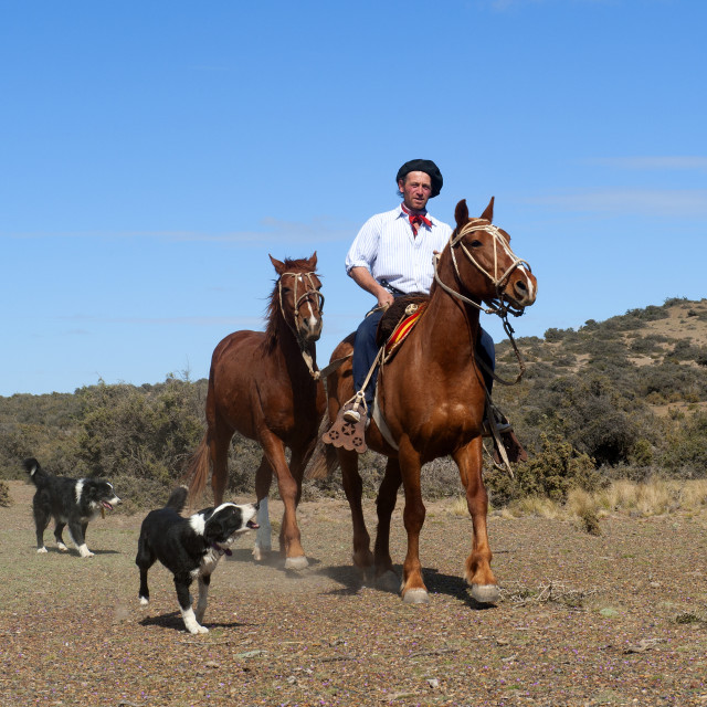 """""""Gaucho riding his horse accompanied by dogs, Peninsula Valdes, Patagonia,..."""" stock image"""