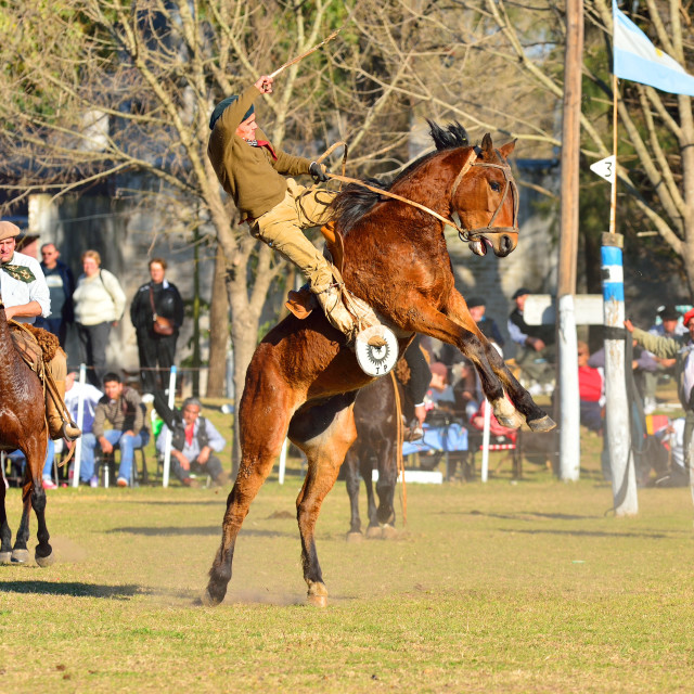 """""""Gaucho riding a wild horse at a Rodeo, Buenos Aires province, Argentina,..."""" stock image"""