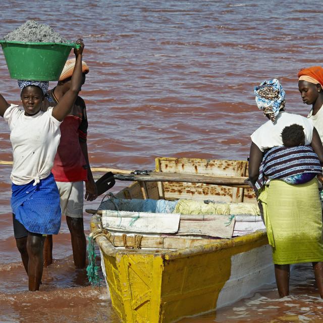 """""""Collecting salt at Redba salt lake (Pink Lake), Senegal, West Africa, Africa"""" stock image"""