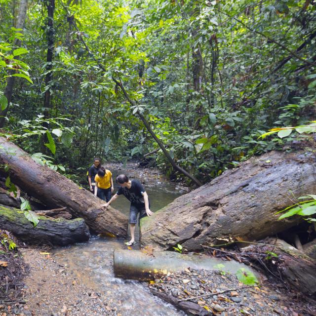 """Ula Temburong National Park, Brunei, Borneo, Southeast Asia, Asia"" stock image"