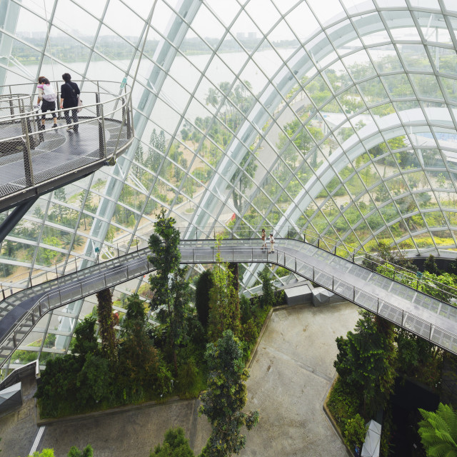 """Canopy walkway, Gardens by the Bay, Cloud Forest, botanic garden, Singapore,..."" stock image"