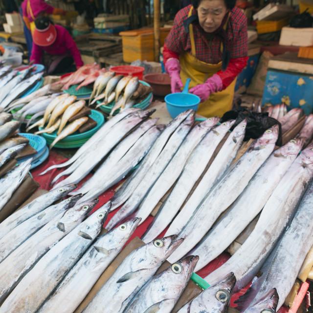 """""""Asia, Republic of Korea, South Korea, Busan, Jagalchi fish market"""" stock image"""