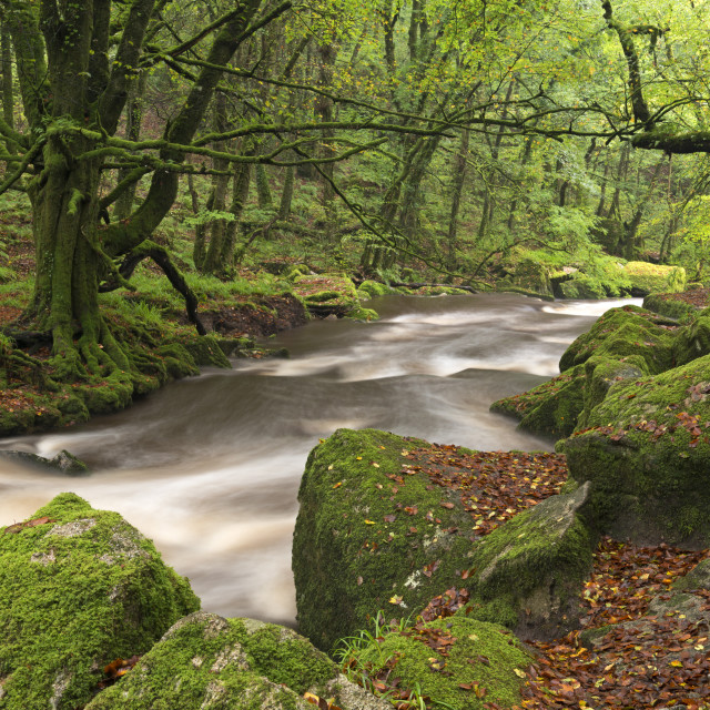 """""""The River Fowey flowing though Draynes Wood at Golitha Falls National Nature..."""" stock image"""