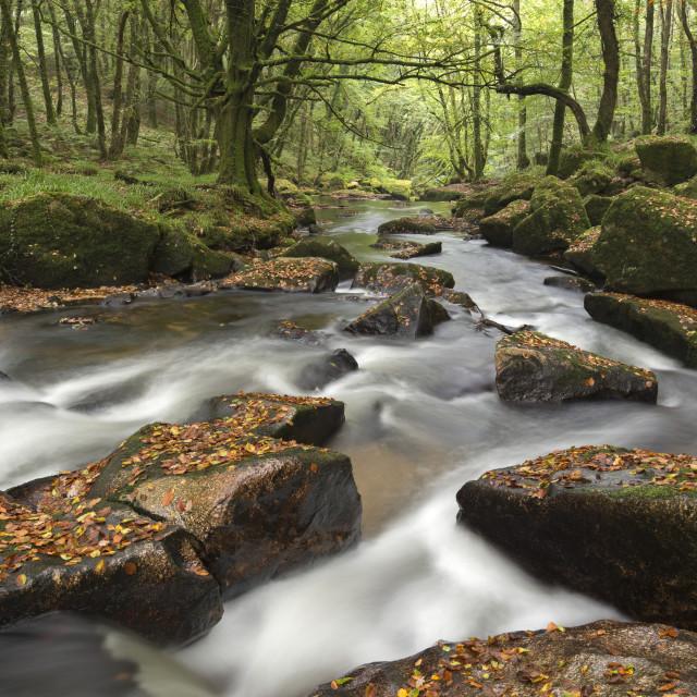 """River Fowey tumbling through rocks at Golitha Falls in autumn, Cornwall,..."" stock image"