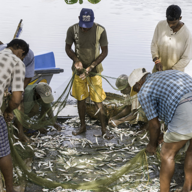 """Local people sorting through the fish they have just caught in the port of..."" stock image"
