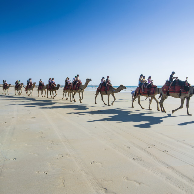 """Tourists riding on camels on Cable Beach, Broome, Western Australia,..."" stock image"