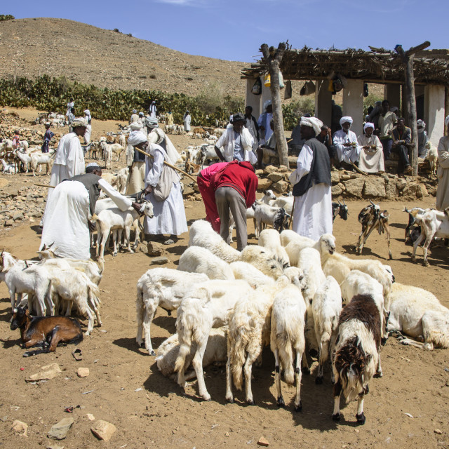 """The Monday animal market of Keren, Eritrea, Africa"" stock image"