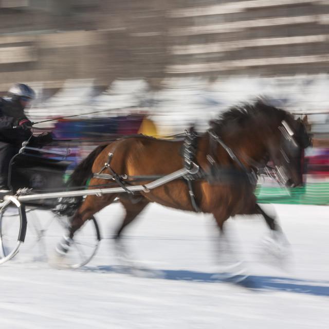"""Sleigh race, Quebec Winter Carnival, Quebec City, Quebec, Canada, North America"" stock image"