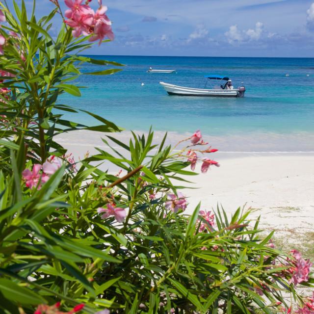 """Long Bay and beach, Antigua, Leeward Islands, West Indies, Caribbean, Central..."" stock image"