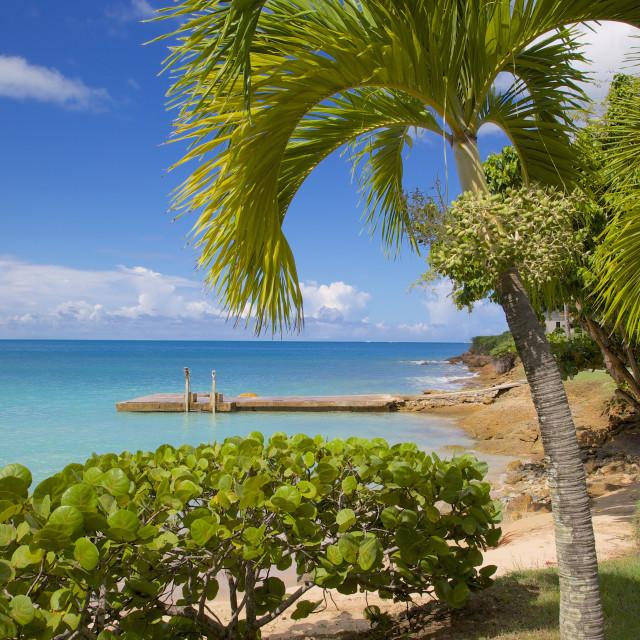 """St. Johns, Antigua, Leeward Islands, West Indies, Caribbean, Central America"" stock image"
