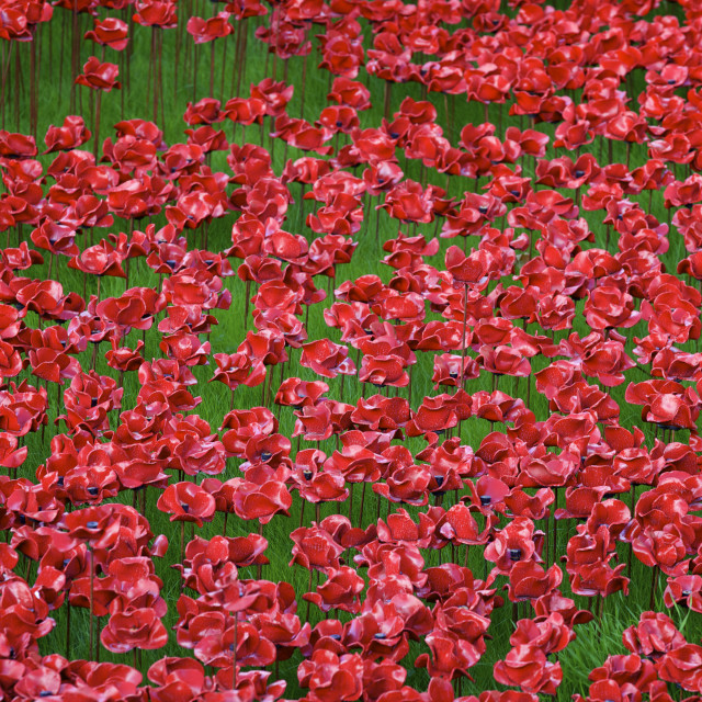 """""""Blood Swept Lands and Seas of Red installation at The Tower of London marking..."""" stock image"""