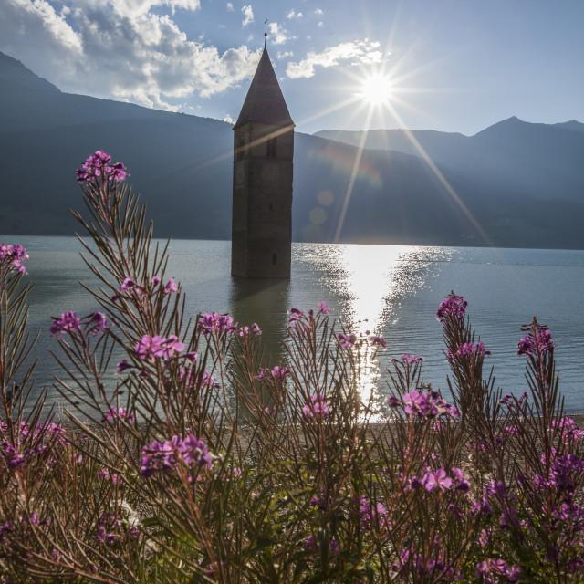 """""""Campanile nel Lago di Resia, rising above Lago di Resia (Reschensee) (Lake..."""" stock image"""