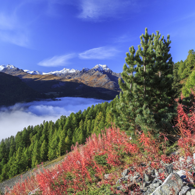 """The blue sky above the Engadine Valley still shrouded in a thick fog, on an..."" stock image"