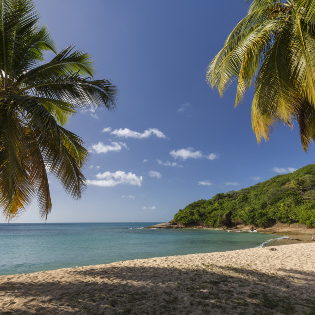 """""""Palm trees thrive on the beautiful beach of Hawksbill which houses one of the..."""" stock image"""