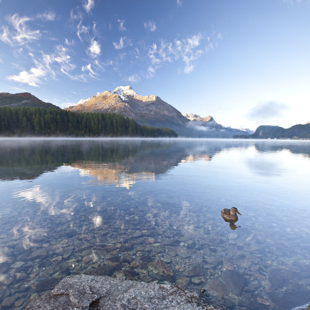 """Piz da la Margna reflecting in Lake Sils by Saint Moritz in Engadine,..."" stock image"
