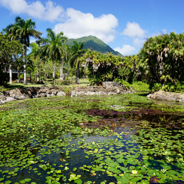 """Nevis Botanical Garden, Nevis, St. Kitts and Nevis, Leeward Islands, West..."" stock image"