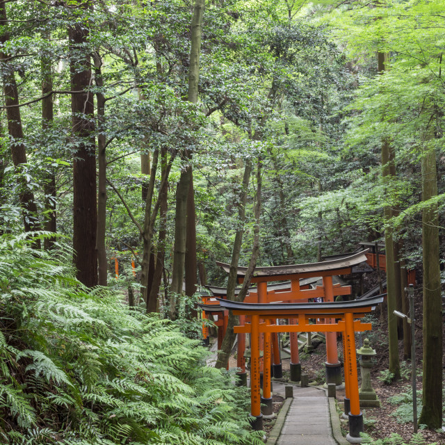 """Fushimi Inari Taisha, Shinto shrine; vermilion torii gates line paths in..."" stock image"