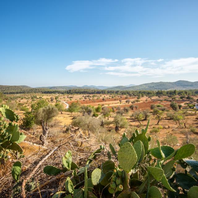 """""""Cacti and Ibiza landscape."""" stock image"""