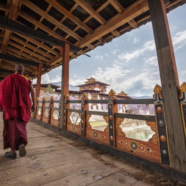 """A monk (lama) of Punakha Dzong crosses the wooden bridge over the river that..."" stock image"