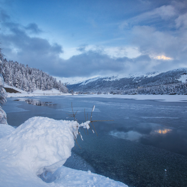 """Snowy trees on the shore of the frozen Lake Sils Upper Engadine Canton of..."" stock image"