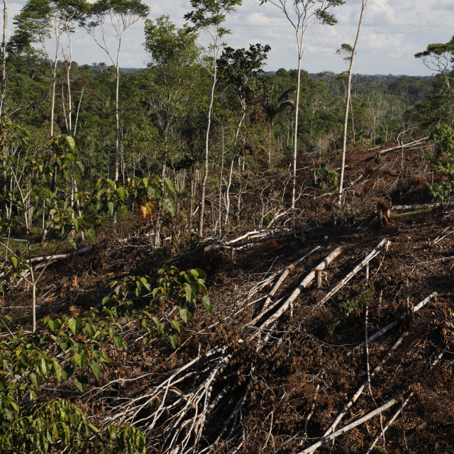 """Deforestation for cattle grazing and timber logging at the Yasuni National..."" stock image"