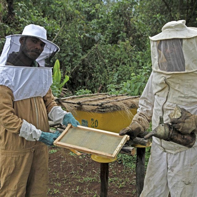 """""""Farmers working in a honey producing co-operative in the Masha area of..."""" stock image"""