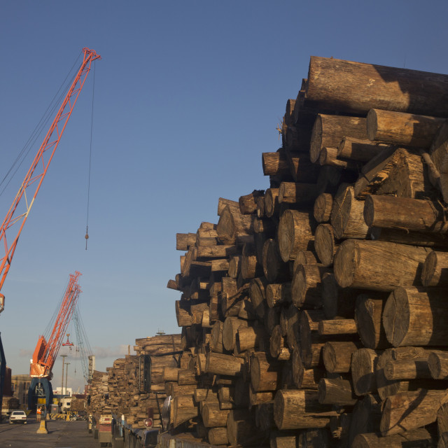 """""""Timber loaded for export at the harbour in Montevideo, Uruguay"""" stock image"""
