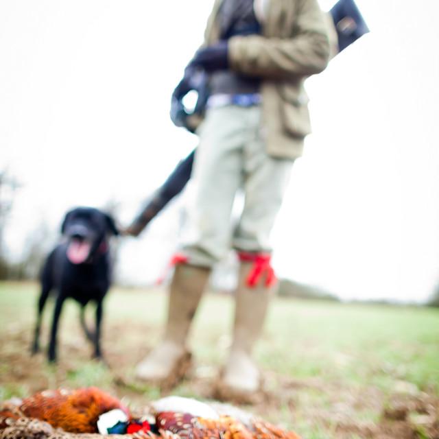 """pheasant and gun and gun dog , Oxfordshire"" stock image"