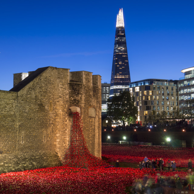 """""""Ceramic poppies forming the installation Blood Swept Lands and Seas of Red to..."""" stock image"""