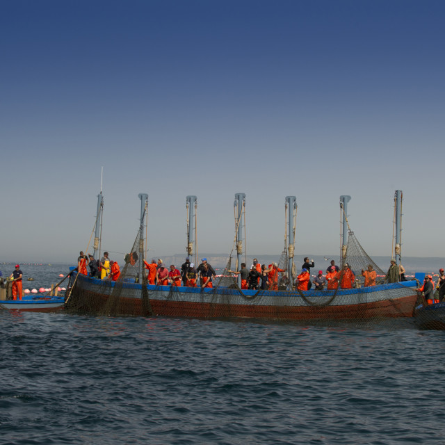 """Almadraba Atlantic bluefin tuna fishery consists of a maze of nets,the final..."" stock image"