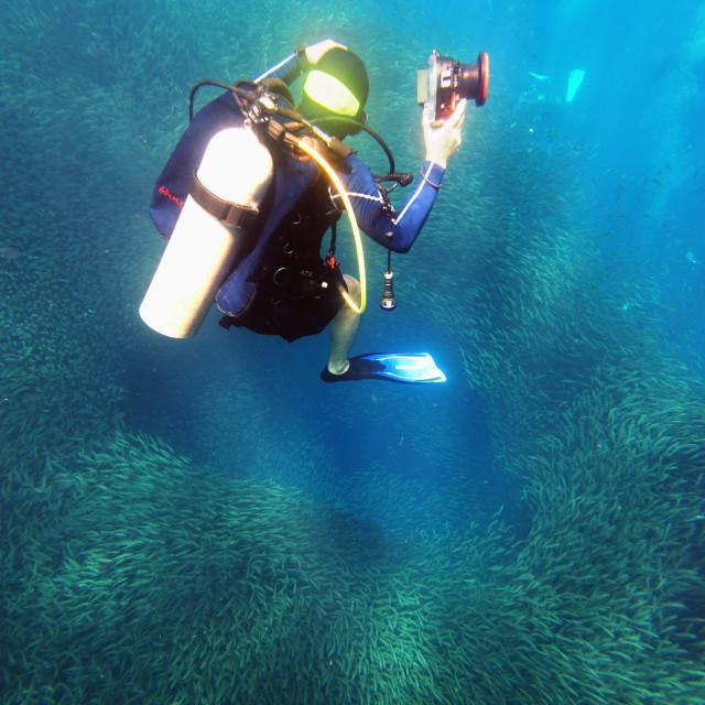 """Shoal of sardines and scuba diver, Panagsama Beach, Moalboal, Cubu, The..."" stock image"