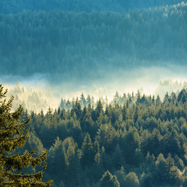 """""""View of misty fog mountains in autumn"""" stock image"""