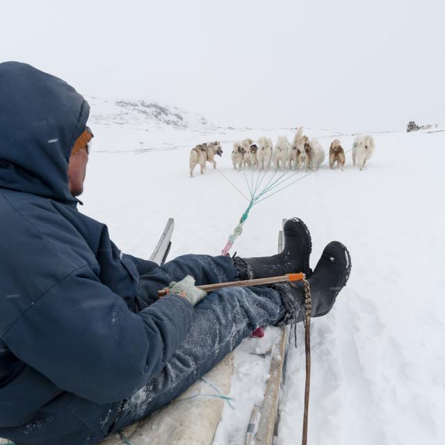 """""""Dog sledge, Greenland."""" stock image"""