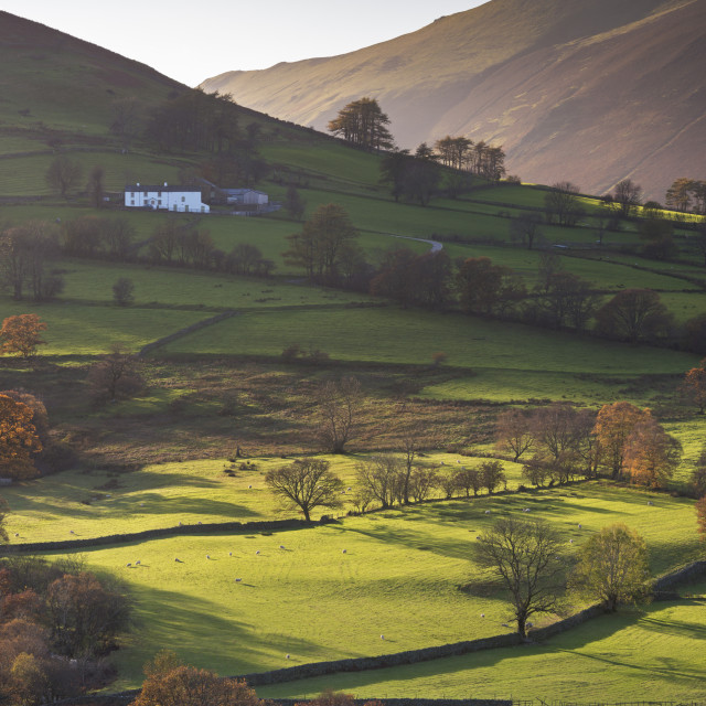 """""""High Snab farmhouse in the beautiful Newlands Valley in autumn, Lake District..."""" stock image"""