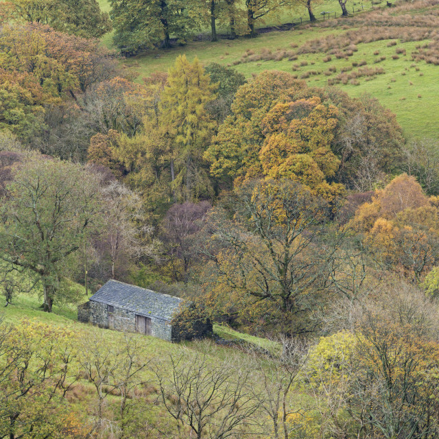 """""""Stone barn surrounded with autumnal trees, Newlands Valley, Lake District..."""" stock image"""
