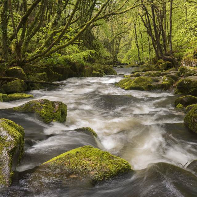 """""""The River Fowey flowing through the moss covered woods at Golitha Falls in..."""" stock image"""